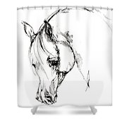 The Arabian Horse Sketch Shower Curtain