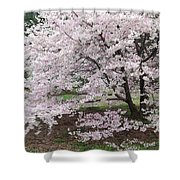 The Arboretum Cherry Blossoms Shower Curtain