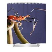Garden Assassin Bug Shower Curtain