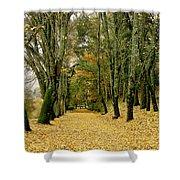 The Autumn Path Shower Curtain