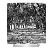 The Avenue Of Oaks Shower Curtain