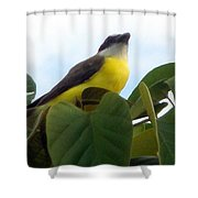 The Banaquit Of Costa Rica Shower Curtain