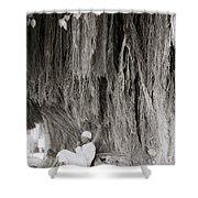 The Banyan Tree Shower Curtain