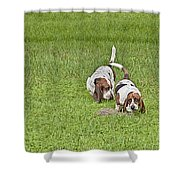 The Bassets Shower Curtain