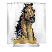 The Bay Arabian Horse 13 Shower Curtain
