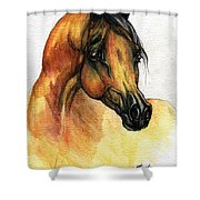 The Bay Arabian Horse 14 Shower Curtain