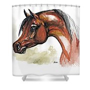 The Bay Arabian Horse 15 Shower Curtain