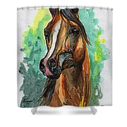The Bay Arabian Horse 2 Shower Curtain