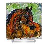 The Bay Arabian Horse 3 Shower Curtain