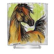 The Bay Arabian Horse 5 Shower Curtain