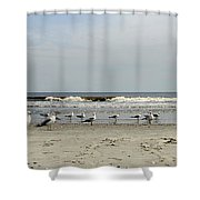 The Beach Boys Shower Curtain by Skip Willits