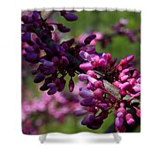 The Beautiful Redbud Tree Shower Curtain