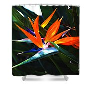 The Beauty Of A Bird Of Paradise Shower Curtain