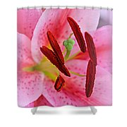 The Beauty Of A Stargazer Shower Curtain
