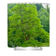The Beauty Of A Tree Shower Curtain