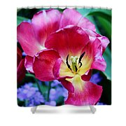 The Beauty Of Flowers Shower Curtain