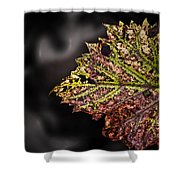 The Beauty Of Stress Shower Curtain