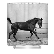 The Beauty Of The Horse Shower Curtain