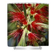 The Bee And Bottlebrush Shower Curtain