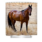 The Big Bay Shower Curtain