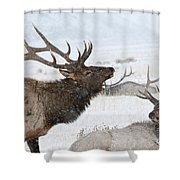 The Big Gathering Shower Curtain