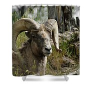 The Big Horn Shower Curtain