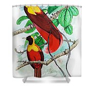 The Birds Of Paradise Shower Curtain
