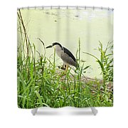 The Black-crowned Night Heron Shower Curtain