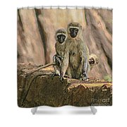 The Black-faced Vervet Monkey Shower Curtain