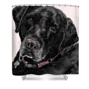 The Black Lab Sweetheart Shower Curtain