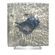 The Black Seashell Shower Curtain