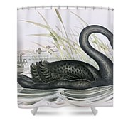 The Black Swan Shower Curtain by John Gould