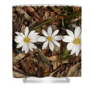 The Bloodroot Trio Shower Curtain