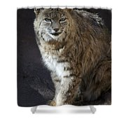 The Bobcat Shower Curtain