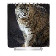 The Bobcat Shower Curtain by Saija  Lehtonen