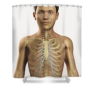 The Bones Within The Body Pre-adolescent Shower Curtain
