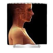 The Brain Female Shower Curtain