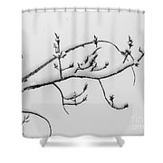 The Branch Of Art Shower Curtain
