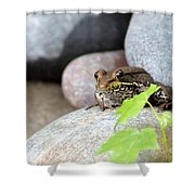 The Bronze Frog Shower Curtain