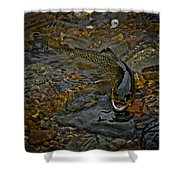 The Brown Trout Shower Curtain by Ernie Echols