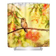 The Bubbly World Of A Hummingbird Shower Curtain