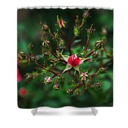 The Bud's For You Shower Curtain