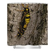 The Bug Shower Curtain