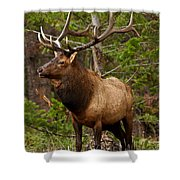 The Bull Elk Shower Curtain