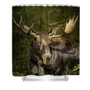The Bull Moose Shower Curtain
