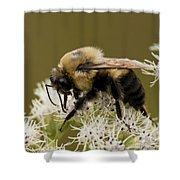 The Bumble Bee.. Shower Curtain