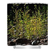 The Burning Bush Shower Curtain