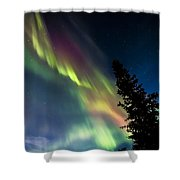 The Burning Tree 2 Shower Curtain