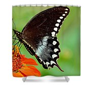 The Butterfly And The Zinnia Shower Curtain