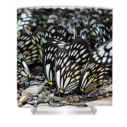 The Butterfly Gathering 2 Shower Curtain